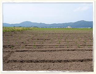 毎年、個別の土壌改良