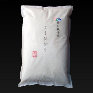 koshihikari5